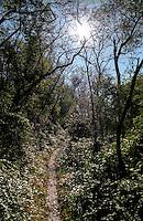 Parco del Ticino presso Vizzola Ticino (Varese). Sentiero nel bosco --- Park of Ticino river near Vizzola Ticino (Varese). Path in the woods