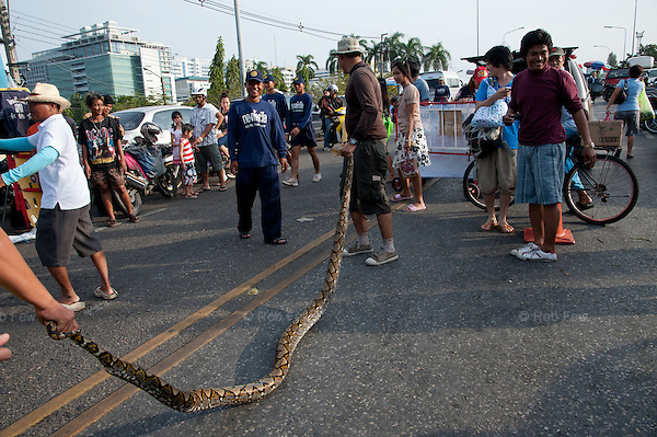 Soldiers and volunteers display a snake just captured in the grounds of a factory in western Bangkok. Snakes and crocodiles were found in many parts of the city during the flood.<br /> <br /> Thailand's worst floods for 50 years finally reached the suburbs of Bangkok in October 2011. While the government dithered and argued with itself, more than 200 people died.