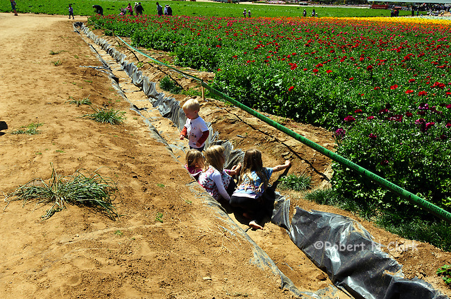 Mothers and children at the flower fields with children playing in a ditch