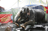 "NEW YORK - JUNE 19: Susie the elephant gets a bath from her trainer Ramon Esqueda before performing in ""Ringling Bros. Barnum and Bailey's The Coney Island Boom A Ring"" Circus on Friday, June 19, 2009 in Coney Island, New York. (Photo by Landon Nordeman)"