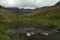 Beaver ponds above Symphony Lake, Alaska.