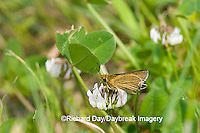 03673-001.05 Swarthy Skipper (Nastra lherminier) on White Clover (Trifolium repens) Prairie Ridge SNA Jasper Co. IL
