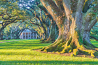 Great Trees of Oak Alley -  This landscape of large live oak tree with their masses root system just as the sun comes up at the Oak Alley Plantation was an incredible site.  You can see the canopy of limbs that engulf the walkway along with the mansion in the background on this morning as the morning sun just begins to highlight the grounds and the large tree trunk roots system to get a feel for their massive size of these 300 year old trees. The tree or only part of the draw to this heritage site which are part of this historic plantation where at one one time slaves were kept from a dark time in our history.  This is plantation grew sugar cane and had many slaves that lived and died here in the past tending to the grounds and people of the house.  They have kept the slaves quarters in tack so you can see the different lives they lived. Lousiana is located in the southern united states and has many of these old mansions along the mississippi river.