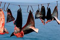 Shark fins, Sea of Cortez, Mexico, Pacific Ocean