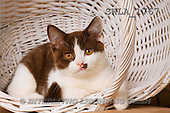 Carl, ANIMALS, photos, kitten, white basket(SWLA1767,#A#) Katzen, gatos