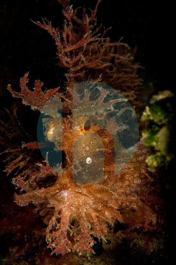 Photographs of the Tasi Tolu dive site in Timor-Leste.  Photographer: Dewi Wilaisono.