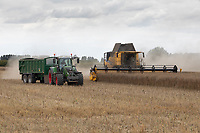 21.7.2020 Harvesting oilseed rape in the Lincolnshire Fens <br />  ©Tim Scrivener Photographer 07850 303986<br />      ....Covering Agriculture In The UK.