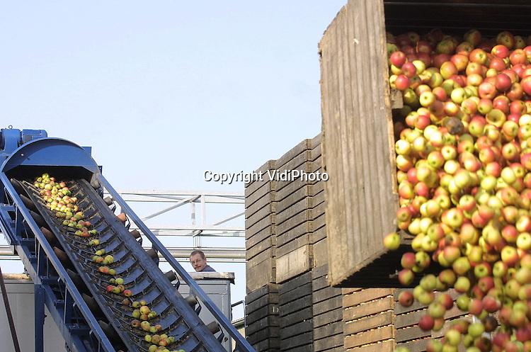 Foto: VidiPhoto..OCHTEN - Op de fruitveiling in Ochten (Fruitmasters) wordt een nieuwe lading doorgedraaide appels overgeladen op een vrachtauto. Het fruit is bestemd voor conservenfabrieken of gaat weg als veevoer. Zo'n 10 procent van de appels wordt op dit moment uit de markt genomen en dat is fors minder dan vorig jaar.  Het zijn vooral de Jonagold appels die de supermarkt niet halen. Dat komt omdat ze door de relatief warme nachten in oktober te snel zijn gerijpt terwijl ze te geel van kleur zijn gebleven.