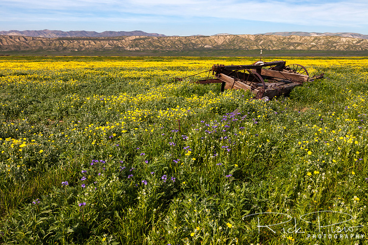 Wildflowers bloom alongside abandoned farm equipment of the Van Matre Ranch at the Carrizo Plain National Monument.