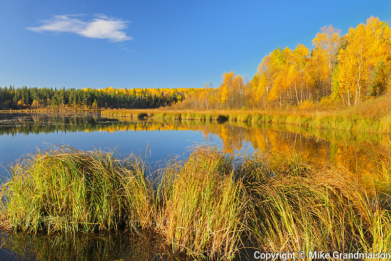 Autumn colored trees and vegetation surround a pond<br />
