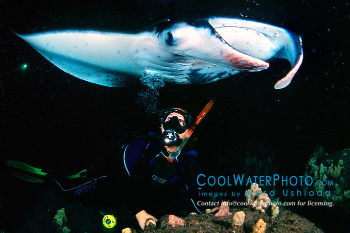 woman scuba diver and reef manta ray or coastal manta, Manta alfredi, feeding at night, Kona Coast, Big Island, Hawaii, USA, Pacific Ocean