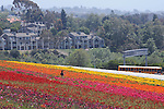 View of the Flowerfields, in Carlsbad, CA, on Wednesday, April 27, 2016. Photo by Jim Peppler. Copyright Jim Peppler  2016.