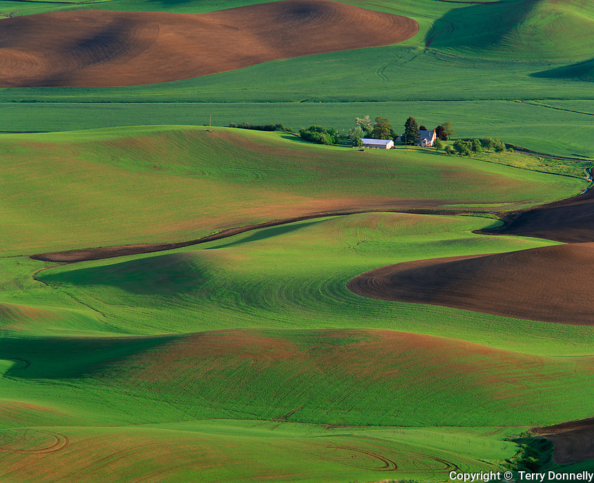 Whitman County, WA      <br /> Morning light white farm buildings nestled in the rolling hills of the Palouse Country