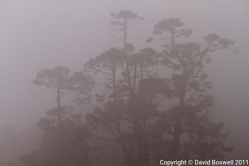 Fog fills the Khumba Valley near Deboche, Nepal.