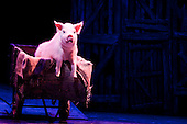 "Musical comedy Betty Blue Eyes, based on the feature film ""A Private Function"" showing at the Novello Theatre, London. Animatronic pig."