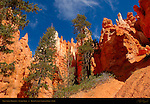 Wall Street Hoodoos, Navajo Trail, Bryce Canyon National Park, Utah
