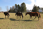 Irish Sovereign (R) follows other mares owned by the Haskell Sisters, Isabelle de Tomaso and Hope Jones at Overbrook Farm in Colts Neck, New Jersey.