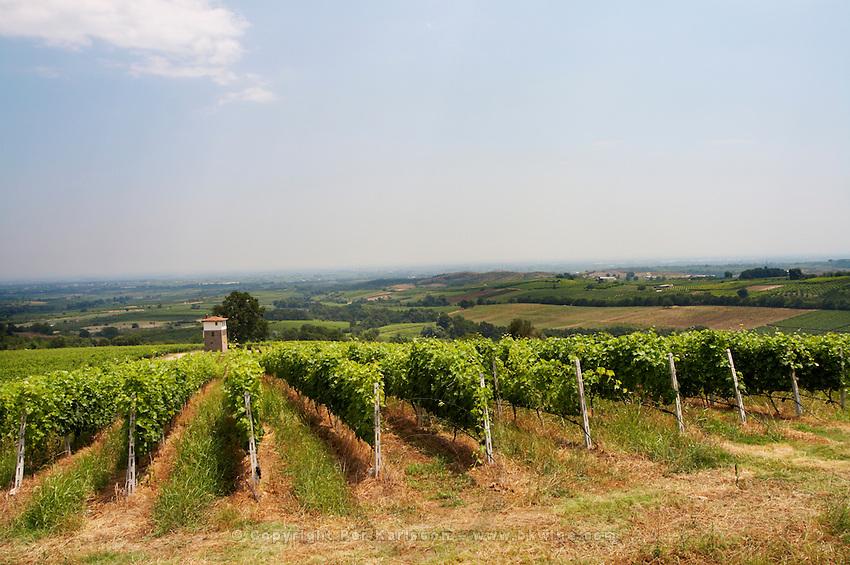 Vineyard. Cabernet Franc. Kir-Yianni Winery, Yianakohori, Naoussa, Macedonia, Greece