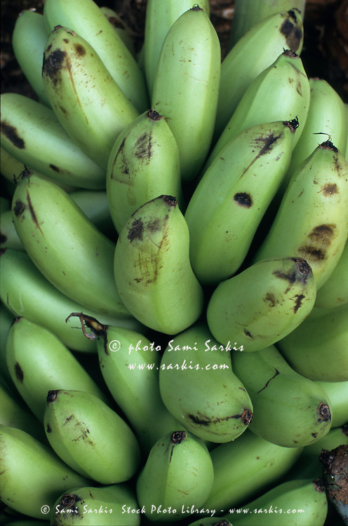 Banana bunches for sale at a market at Port Vila, Efate, Vanuatu.