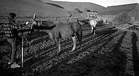 Scott Shafer photographs a curious horse, 1987.  &amp;#xA;<br />