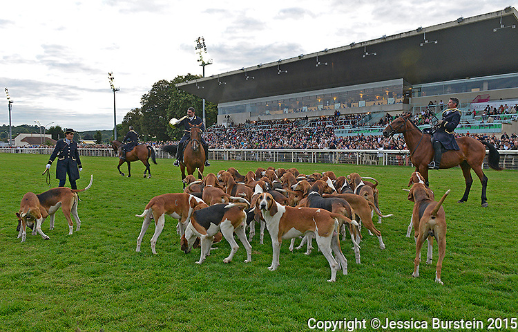 Display of hunting dogs at Vichy's equestrian center