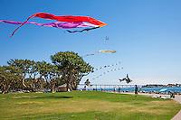 Flying Kites at the embarcadero Marina Park in San Diego