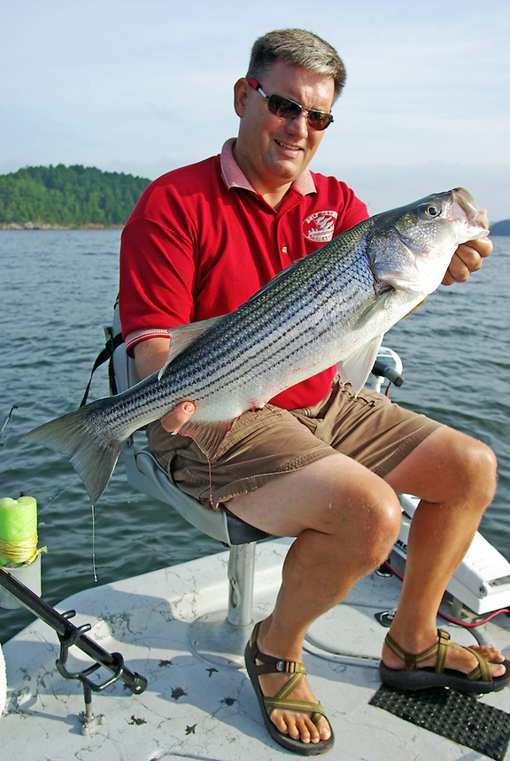 Angler displaying striped bass caught in Lake Greeson, Arkansas