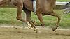 Nouveau Rich hooves