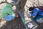 Nick & Miriam Setting Leg Traps For Cat