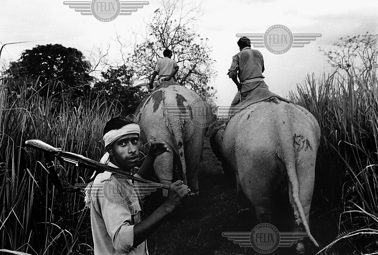 A group of park rangers with elephants patrol Kaziranga National Park, on the lookout for tigers and poachers.