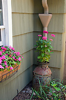 Rain drainage spout gutter and zinnia container plant of rustic metal jug, windowbox of impatiens, house corner plantings of annuals