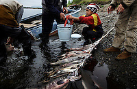 Anastasia Navykkha helps her father take fish out of the net at fish camp.