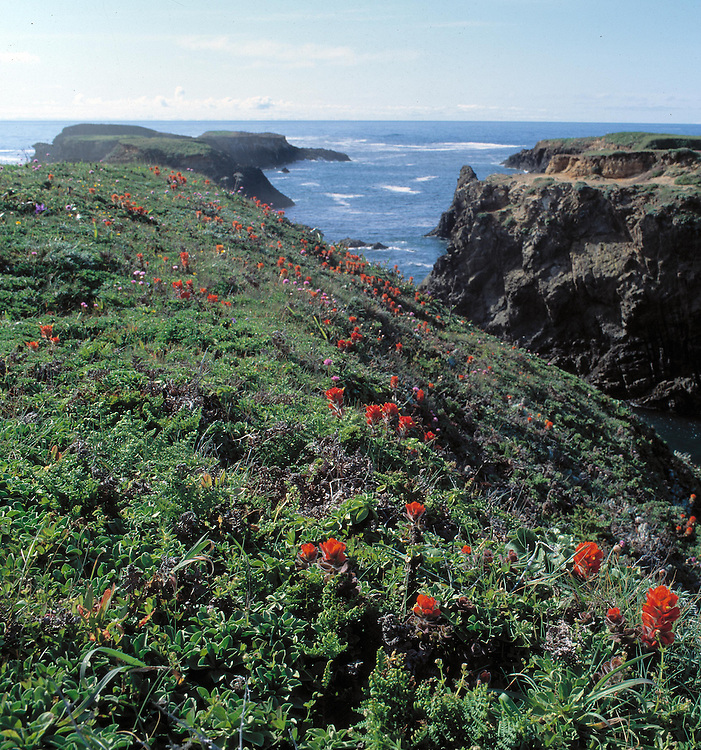 Mendocino headlands wildflowers