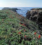 Mendocino headlands wildflowers