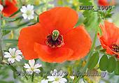 Gisela, FLOWERS, BLUMEN, FLORES, photos+++++,DTGK1900,#f#