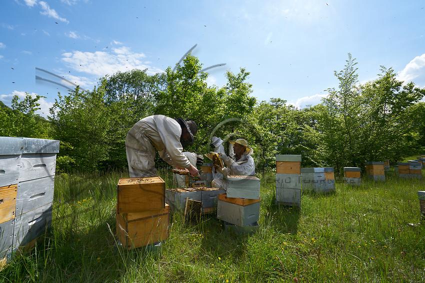 Inspection of the smaller Warré type of hives is much easier.<br /> L&rsquo;inspection des ruches de type warr&eacute; de plus petite taille est plus facile.
