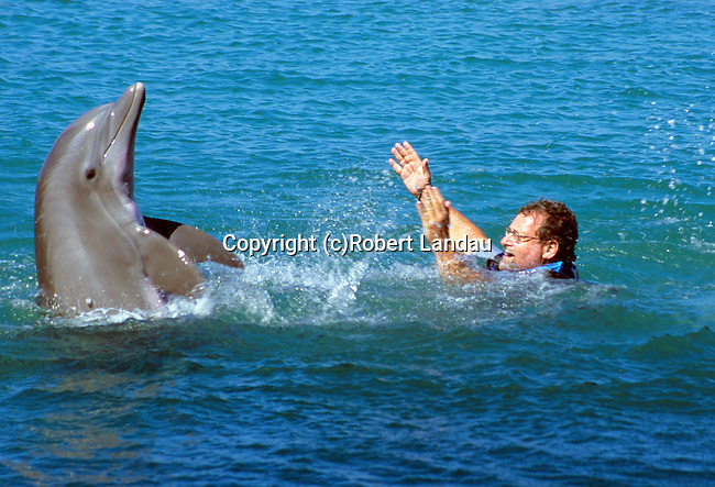 Peter cavorting with dolphins in Jamaica