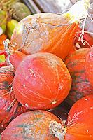 Red pumpkins in a basket Ferme de Biorne duck and fowl farm Dordogne France