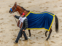 LOUISVILLE, KENTUCKY - MAY 05:  Abel Tasman #13, is walked to the paddock before winning the the Longines Kentucky Oaks at Churchill Downs on May 5, 2017 in Louisville, Kentucky. (Photo by Jesse Caris/Eclipse Sportswire/Getty Images)