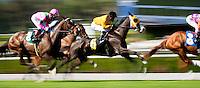 Horses race in the Providencia Stakes at Santa Anita Park in Arcadia California on April 7, 2012.