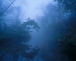 North Cedar Creek and fog, Sny Magill natural area, Clayton County, Iowa
