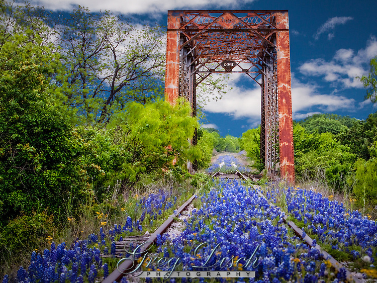 Wildflowers line the railroad tracks in the Texas Hill Country near Fredericksburg Texas. Bluebonnets, the official Texas state flower, blanket large portions of the state in early spring. Their peak blooming season is in late March and early April. Bluebonnets depend on abundant winter rains and warm spring weather.