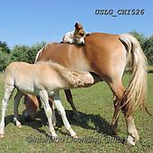 CHIARA,REALISTIC ANIMALS, REALISTISCHE TIERE, ANIMALES REALISTICOS, paintings+++++,USLGCHI526,#A#, EVERYDAY ,photos