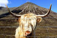 20190519 Viaggio attraverso la Scozia