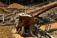 """A cada dia garimpeiros ampliam as ·reas a serem exploradas em busca de ouro e lentamente v""""o entrando na floresta derubando ·rvores e mudando o curso das ·guas dos igarapÈs..<br /> No meio da mata garimpeiros continuam a chegar em busca de ouro na grota Rica. Milhares se encontram espalhados pela regi""""o do garimpo em busca de novas jazidas. O  garimpo descoberto em Novo Aripuan"""", no sul do Amazonas no igarapÈ da Preciosa, um afluente do rio Juma (a 70 km da cidade de ApuÌ) vai crescendo com dezenas de buracos abertos sob a selva.<br /> Novo Aripuan"""", Amazonas, Brasil<br /> 04/02/2007<br /> Foto: ©Paulo Santos"""