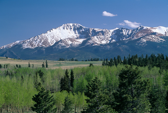 Spring scenic of snowcapped Pikes Peak with groves of aspen beneath, CO