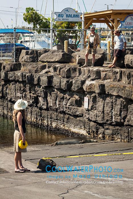 NOAA government officials putting tapes for Hawaiian monk seal, Monachus schauinslandi, basking at boat ramp, young male, critically endangered species, Honokohau Harbor, Kona Coast, Big Island, Hawaii, USA, Pacific Ocean
