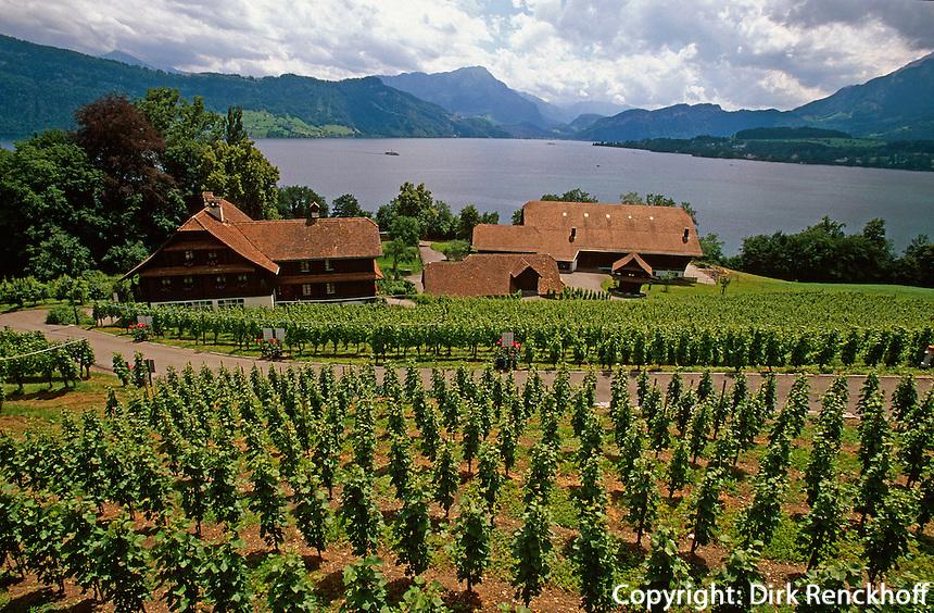 Schweiz, Weinberge bei Schloss Meggenhorn am Vierwaldstätter See