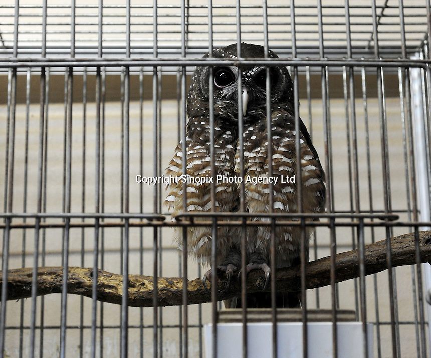 An African woodowl (Cites 2) for sale at 380,000 yen (4225 US$) at the Noah Inner City Zoo. The Noah Inner City Zoo is a pet shop that sells exotic animals. The 'zoo' claims to have more than 300 species for sale, many of which are rare and some are even endangered.
