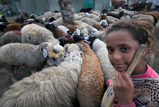 Huda, 10, is seen at a public market in Cairo where she helps her father selling sheep. Friday, November 20, 2009. The world marks today the 55th anniversary of Universal Childhood Day. photo by Wissam Nassar